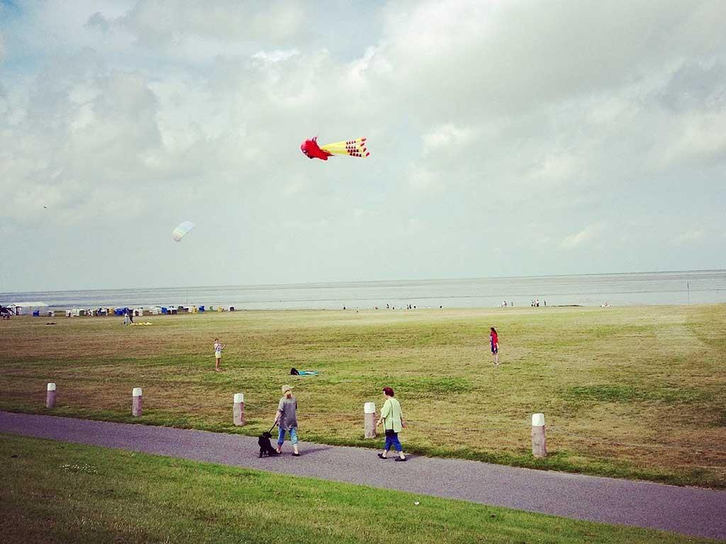 Fly-kite